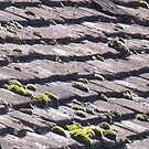 Shingles on a roof - 2  by bubblehex08