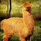 Al Paca (Call me Al ... !) by Chris Armytage