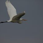 Egret flying by Marion Joncheres