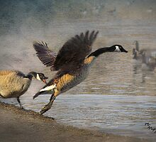 """Wild Goose Chase"" by Melinda Stewart Page"
