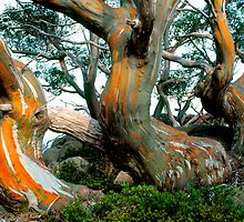 Snow Gums by Ern Mainka
