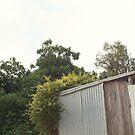 shed by Kim Jackman