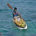 Surfboard coconuts by robigeehk