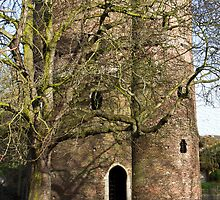 Tree by Cow Tower, Norwich. by BizziLizzy