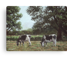 Two Cows in field at Throop Canvas Print