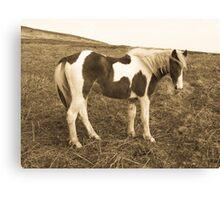 Wild West Pony Canvas Print