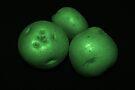 potato trio: green by dedmanshootn