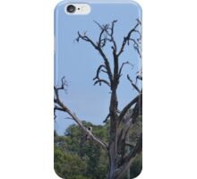 Tree by the River iPhone Case/Skin