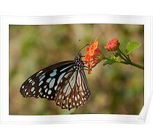Glassy Tiger Poster