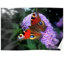 Butterfly Cushion Poster