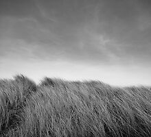 Grass in Bull Island by Alessio Michelini
