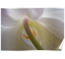 Orchid Stems III Poster