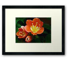 Kaffir Lily: Cheerful And Bright Framed Print