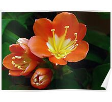 Kaffir Lily: Cheerful And Bright Poster
