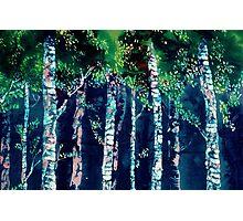 Into The Birch   Photographic Print