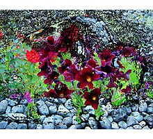 Buffalo Flower River Rocks Photographic Print