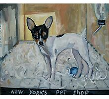 """dog from New York"" Photographic Print"