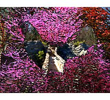 Rooster Floral Bridge Photographic Print