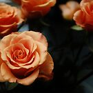 Just Rosey by Annabelle Evelyn
