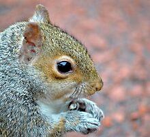 Squirrel Profile by Dorothy Thomson