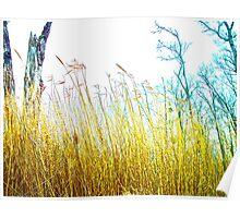 Tall Grass Love Poster