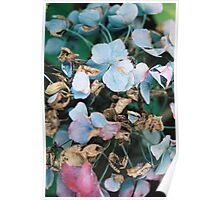 Untitled Flowers Poster