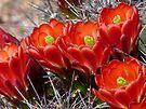 Spring Flowers in the Desert by Lucinda Walter