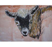 Nigerian Dwarf Dairy Goat Photographic Print