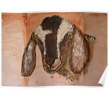 Nubian Dairy Goat Poster