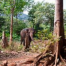 The Asiatic Elephant by Kerry Dunstone