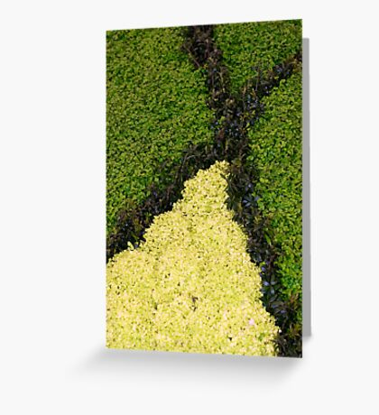 Green X Greeting Card