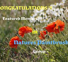 Featured Member Banner by AnnDixon