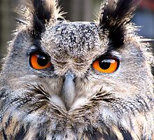 Gandalf the Eagle Owl by Fe Messenger