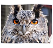 Gandalf the Eagle Owl Poster