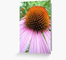 Echinacea Bud Greeting Card