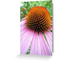 Echinacea Bud Greeting Card