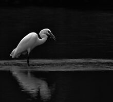 Egret by Lee LaFontaine