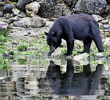 Bear reflection  by Darren Bailey LRPS