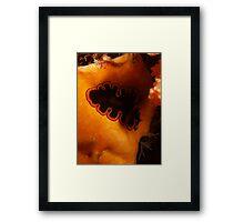 golden lined flatworm 2 rottnest island reef Framed Print