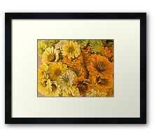 Yellow Zinnias Framed Print