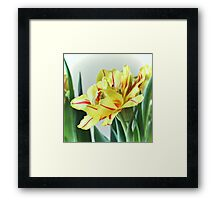 Frilly Tulip Framed Print