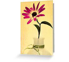 Senetti Pericallis #1 Greeting Card
