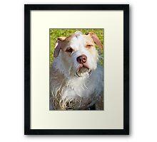 Toby Framed Print