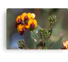 Yellow-eyed Flame Pea Canvas Print