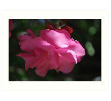Oleander Shine Art Print