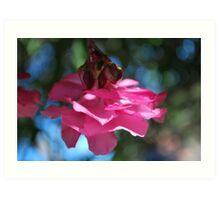 Oleander sweetness  Art Print