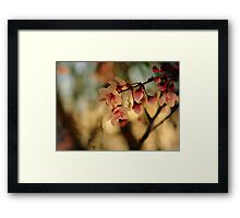 Blossoms & Light Framed Print