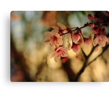 Blossoms & Light Canvas Print