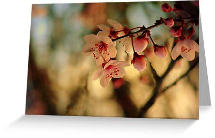 Blossoms & Light by Kitsmumma