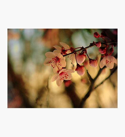 Blossoms & Light Photographic Print